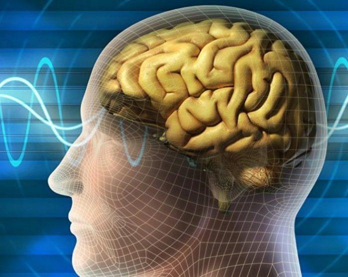 پیش بینی مغز